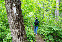 Appalachian Trail. White blaze marks the Appalachian trail when I hiker passes by on the trail royalty free stock photo