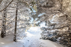 Appalachian Trail Winter Hike Royalty Free Stock Photos