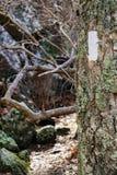 Appalachische Spur auf Donner Ridge Stockbilder