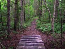 Appalachische Spur in Pennsylvania Lizenzfreies Stockfoto