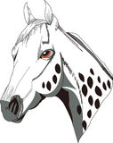 Appaloosa Head Royalty Free Stock Images