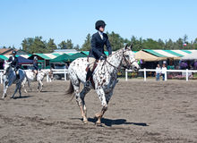 Appaloosa Horse Warm Up. A girl warms up her appaloosa horse for a competition show Stock Photo