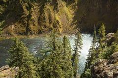Appanni al fondo delle cadute superiori del fiume Yellowstone Fotografie Stock Libere da Diritti