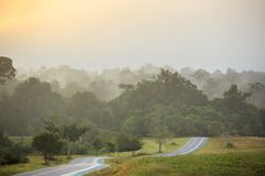 Appanni l'aumento di mattina sopra la foresta, alberi, quale il paese delle meraviglie Fotografia Stock Libera da Diritti