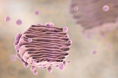 Apparato del Golgi della cellula, vista del primo piano royalty illustrazione gratis