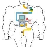 Apparato digerente artificiale Persona di digestione Gola e stomaco illustrazione di stock