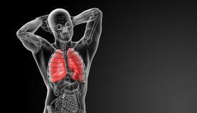 Apparato respiratorio umano nei raggi x Fotografia Stock Libera da Diritti