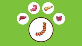 Appareil digestif avec l'animation du mal d'estomac HD illustration libre de droits