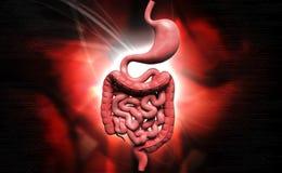Appareil digestif humain illustration stock