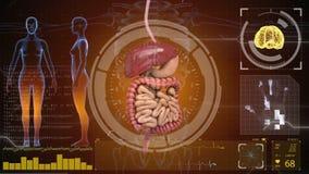 Appareil digestif, intestins sur le fond futuriste de HUD illustration libre de droits