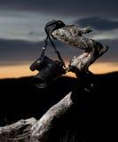 Appareil-photo dans le coucher du soleil Photo libre de droits