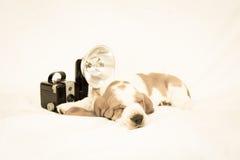 Appareil-photo de vintage avec le chiot de basset Image libre de droits
