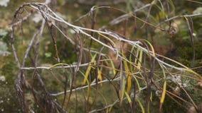 Appareil-photo panoramique Texture d'un vieux mur avec des plantes et des fleurs Le concept de la durée banque de vidéos