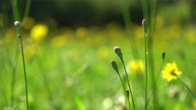 Appareil-photo se déplaçant par le pré avec les fleurs sauvages banque de vidéos