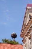 Appareillez les cigognes dans le joncteur réseau d'arbre d'emboîtement construisant le ciel bleu Photographie stock libre de droits