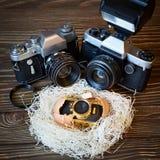Appareils-photo de SLR de concept et petit contrat comme famille dans le nid Photo libre de droits