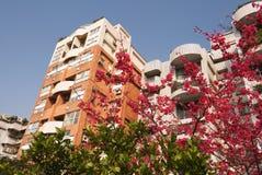 Appartamento del fiore Immagine Stock