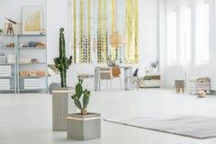 Appartement avec le cactus décoratif image libre de droits