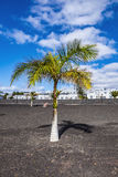 Appartments with palm tree in Playa Blanca Royalty Free Stock Photo