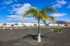 Appartments with palm tree in Playa Blanca Stock Photo