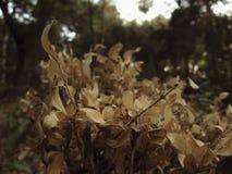 Appassito ed asciughi le foglie con profondità di campo nel ` di Parque Messico del ` Fotografia Stock Libera da Diritti
