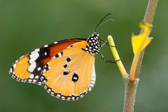 Appealing butterfly on a plant Stock Photography