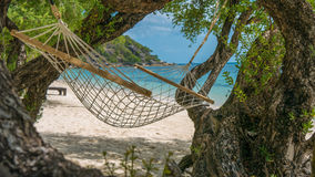 Appealing Hammock between bizarre Trees , Haad Rin , Koh Pangang.  Stock Images