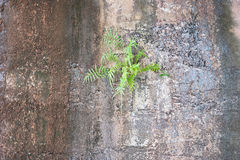 Appearance mountain fern stuck on cliff.Nature background Stock Images