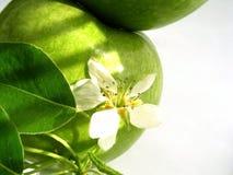 Appel & bloem royalty-vrije stock foto