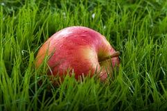 Appel in het Gras Stock Fotografie