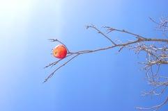 Appel op een tak Stock Foto's