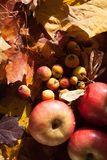 Appel op esdoornbladeren stock afbeeldingen