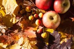Appel op esdoornbladeren stock foto