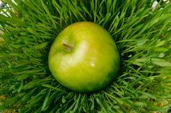 Appel op gras Stock Fotografie