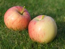 Appel op groen gras Royalty-vrije Stock Foto's
