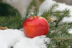 Appel op sneeuw royalty-vrije stock fotografie
