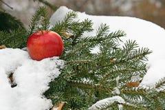 Appel op sneeuw stock foto