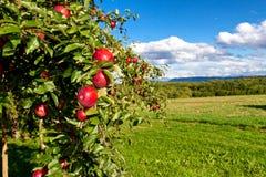 Appel tree´s Stock Afbeeldingen