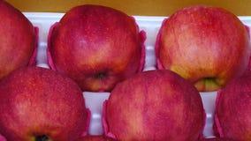 appelen stock video