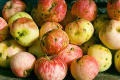 Appelen, appel, fruit, rood, verse achtergrond, de herfst, daling Royalty-vrije Stock Fotografie