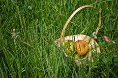 Appelen, appelen in de mand, picknick Stock Afbeeldingen