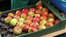 Appelen in de doos, fruitverwerkingsinstallatie stock afbeelding