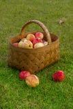 appelen in de mand royalty-vrije stock foto's