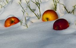Appelen in de sneeuw royalty-vrije stock foto's