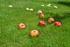 Appelen, de zomer, gras, vitaminen, vruchten royalty-vrije stock foto's