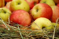 Appelen die in hooi worden opgeslagen Stock Afbeeldingen