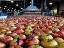 Appelen die in water in Verpakkingspakhuis die drijven worden gewassen royalty-vrije stock foto's