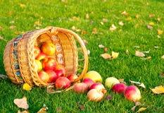 Appelen in een mand Royalty-vrije Stock Afbeeldingen