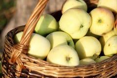 Appelen in een mand Stock Afbeelding