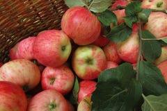 Appelen in een mand Royalty-vrije Stock Foto